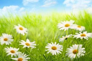 spring-splendor-sky-1720464-480x320